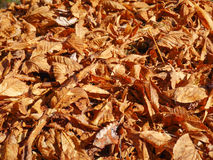 Dry leaves. Large heap of dry leaves Stock Photos