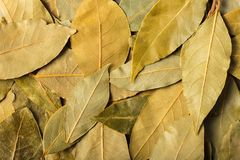 Dry leaves laurel. Background food, texture of dry leaves laurel royalty free stock photo