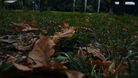Dry Leaves Lay on the Grass