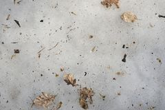 Dry leaves on melting ice stock photography