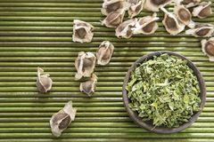 Dry leaves and moringa seeds. Moringa the species with the most nutritional value Stock Photo