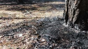 Dry leaves and needles smoke under tree in the forest. Threat of forest fire. Dry leaves and needles smoke under a tree in the forest. Threat of forest fire stock footage