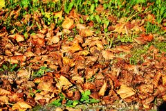 Dry leaves in october, autumn background, close up stock photography