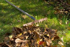 Autumn in garden Royalty Free Stock Photo