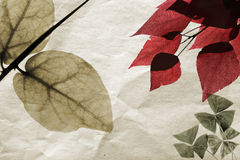 Dry leaves on old toned paper background. Herbarium illustration Stock Photos