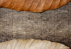 Dry leaves on old wood background. Dry leaves on top and bottom with old wood background Stock Photos