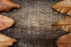 Dry leaves on the old wooden background. The ends of the leaves in the side on the old wooden background Stock Photo