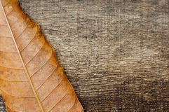 Dry leaves on the old wooden background. Dry leaves on the side on the old wooden background Royalty Free Stock Photography