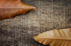 Dry leaves on the old wooden background. Dry leaves on top and bottom on the old wooden background Stock Images