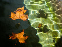 Dry leaves over water. Two dry leaves over water and sadows Stock Photo