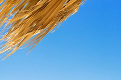 The dry leaves of the palm trees against the clear sky. A hot day in Hurghada, El Quseirr Royalty Free Stock Photos