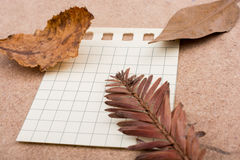 dry leaves on on paper on brown background Stock Photos