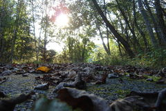 Dry leaves on the path. In the forest royalty free stock image