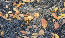 Dry leaves on a pile of ashes. Dry leaves on a pile of ashes from the burned grass stock photography