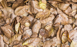Dry leaves pile. On the ground of park stock images