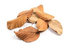 Dry Leaves Pile Isolated. Pile of fallen dry leaves isolated on white background stock photos