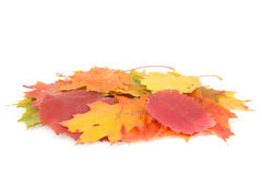Dry leaves pile Royalty Free Stock Photo