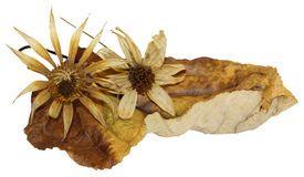 Dry  leaves of poplar with artichoke flowers Stock Image