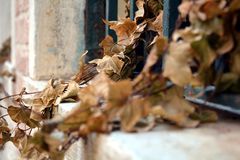 Dry leaves in pots at a romantic window in Venice. Romantic image of dry leaves of some plants and flowers in pots placed at the corner of a Venetian window royalty free stock image