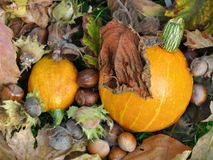 Dry leaves and pumpkin Royalty Free Stock Photo