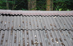 Dry leaves residue on the tile roof.  Royalty Free Stock Photography