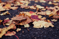 Dry leaves on the road Royalty Free Stock Image