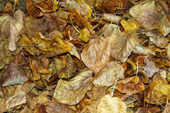 Dry leaves on the road. Fallen leaves a nuisance and danger on roads Royalty Free Stock Photos