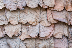 Dry leaves roof Royalty Free Stock Photography
