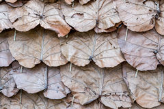 Dry leaves roof Stock Image