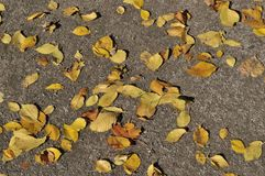 Dry leaves on sand footway Royalty Free Stock Photography