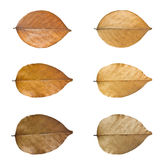 Dry leaves set. Royalty Free Stock Photos