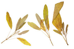Dry leaves Stock Images