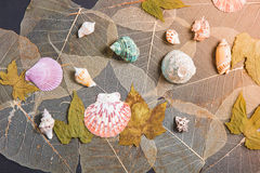 Dry leaves and shell Royalty Free Stock Photo