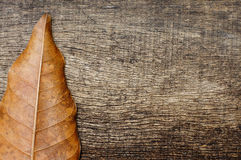 Dry leaves on the side of the old wooden background. End of the dry leaves on the side on the old wooden background Royalty Free Stock Images