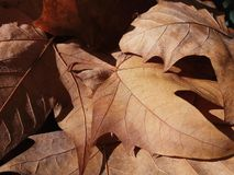Dry leaves. Some dry fallen leaves. Autumn in Barcelona Stock Photography