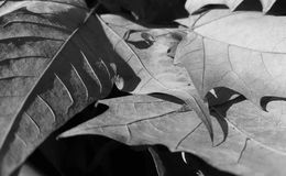 Dry leaves. Some dry fallen leaves. Autumn in Barcelona Stock Image