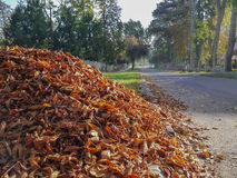 Dry leaves on the street Royalty Free Stock Photo
