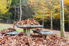 Dry leaves on a table in a park in autumn Royalty Free Stock Photography