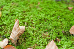 Dry leaves in te ground, covered on moss Royalty Free Stock Photos