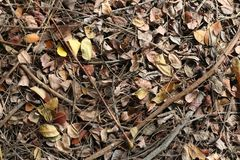 Dry leaves texture background, Brown of dry leaves royalty free stock images