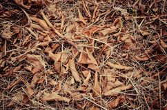 Dry leaves texture on ground. stock photo