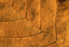 Dry leaves textured Royalty Free Stock Image
