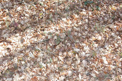 Dry leaves Royalty Free Stock Photos