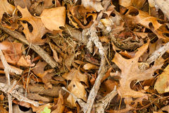 Dry leaves and twigs. Background image of dry sticks and leaves Royalty Free Stock Photo