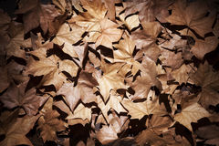 Dry leaves with vignettes Stock Image
