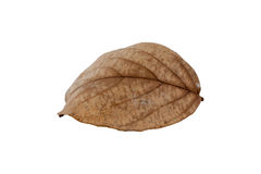 Dry leaves on white background. Dry autumn leaf of  isolated on white background Royalty Free Stock Photography