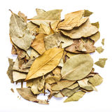 Dry leaves on white background by top view.  Stock Photo