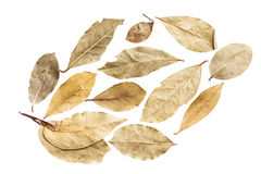 Dry leaves on white background by top view.  Stock Image