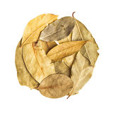 Dry leaves on white background by top view.  Stock Photos