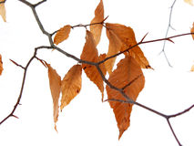 Dry leaves winter Stock Photos